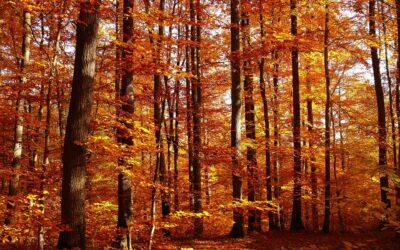 Castañas y boniatos, los reyes del otoño