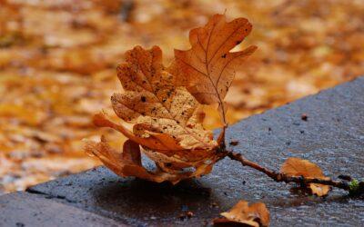 Lentejas verdes de otoño