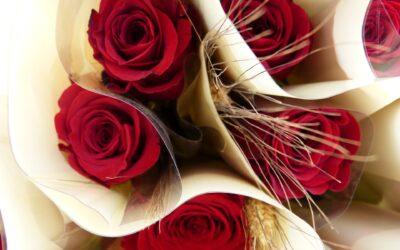 Rosa de Sant Jordi