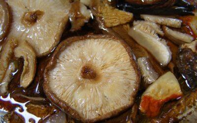 Paté de shiitakes y champiñones