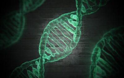 Telómeros: el secreto de la eterna juventud